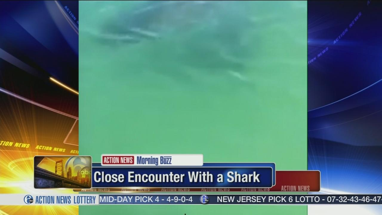 VIDEO: Woman screams during close encounter with shark