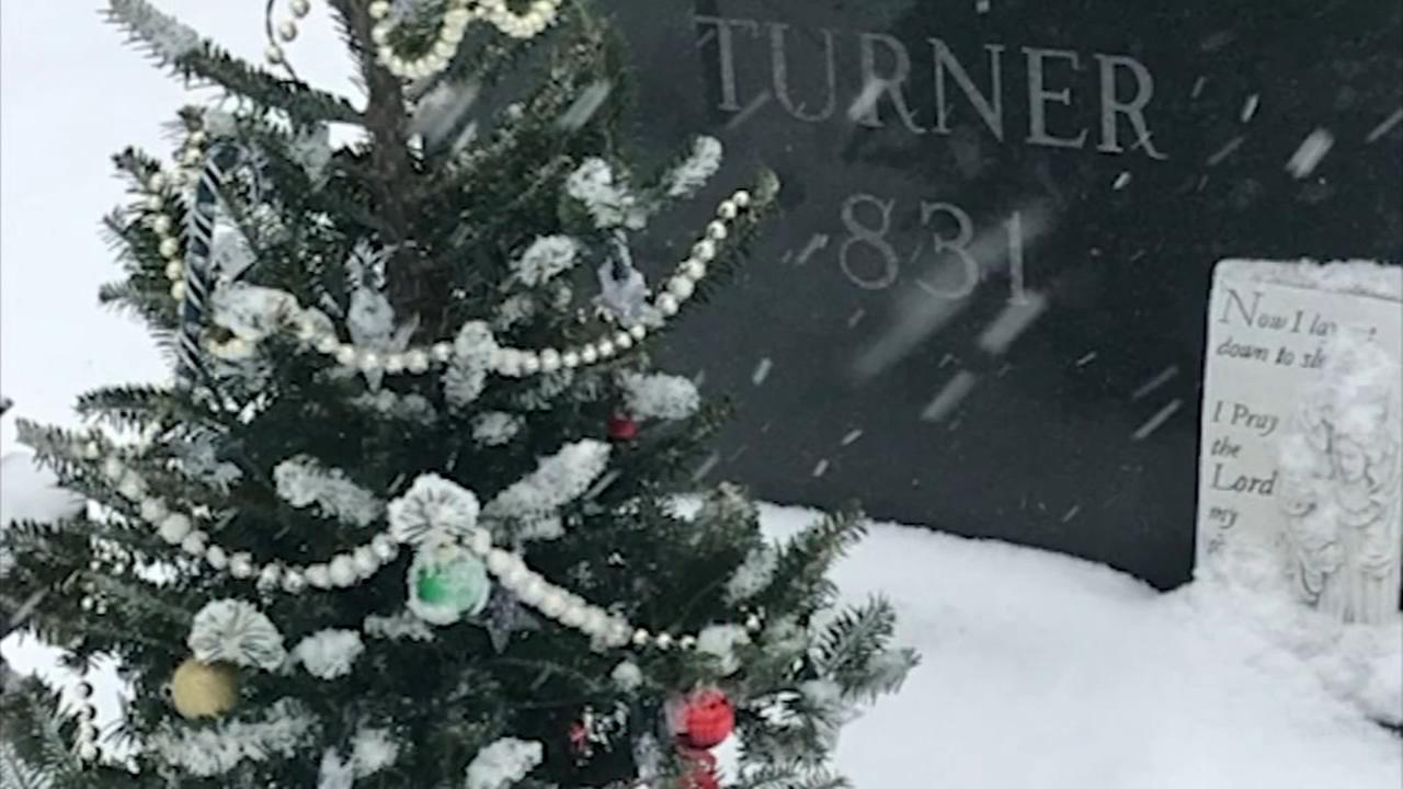 Tree planted by deceased child stolen from familys yard