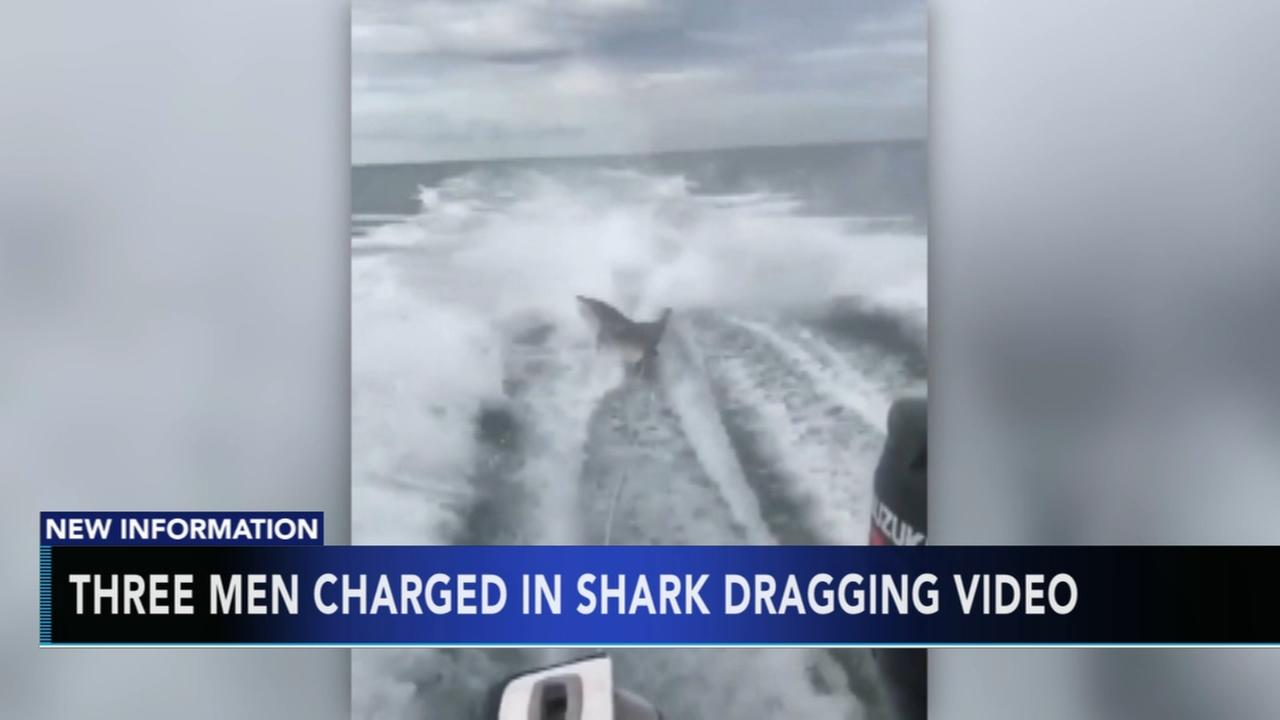 3 men charged in shark dragging video