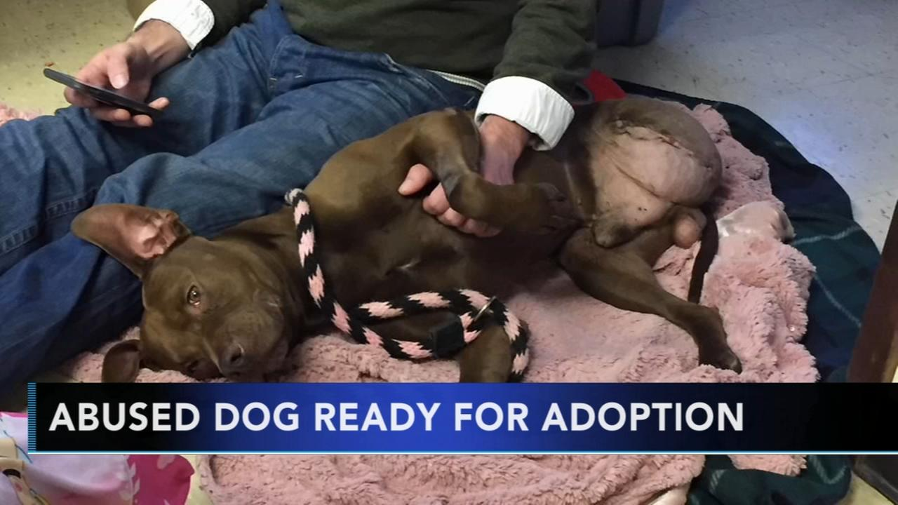 4-year-old dog abused by owner ready to find his forever home