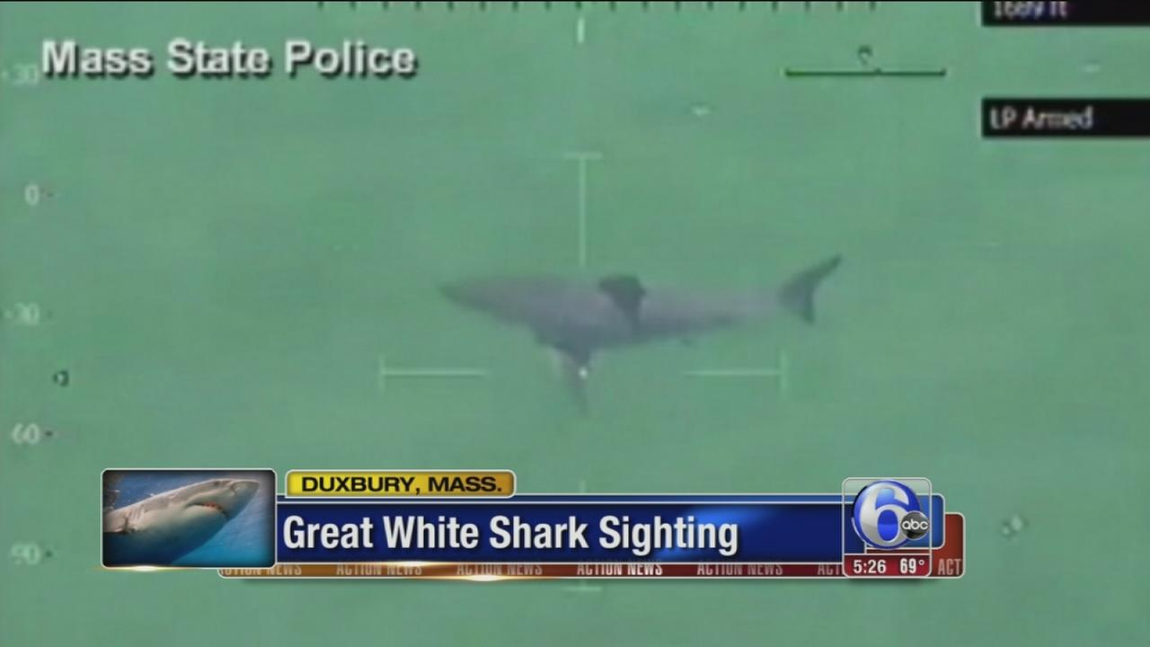 VIDEO: Great White Shark sighting off Mass. coast