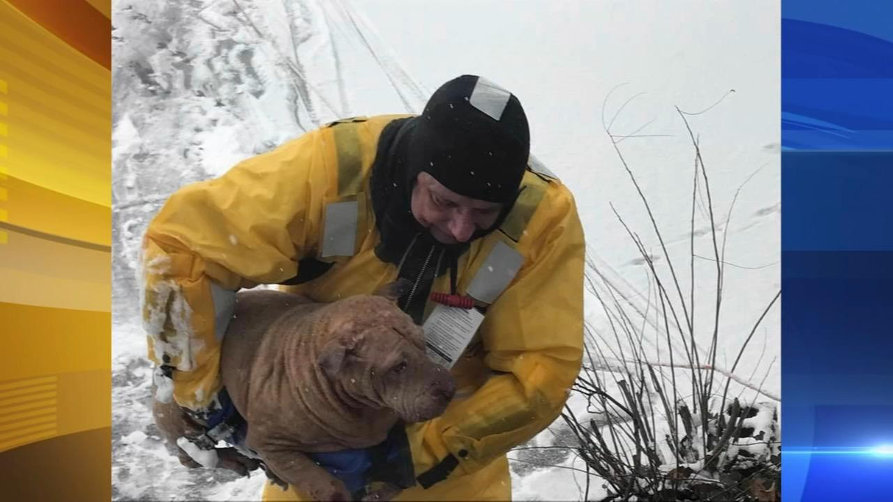 Firefighters rescue dog that fell through ice in Oaklyn, NJ