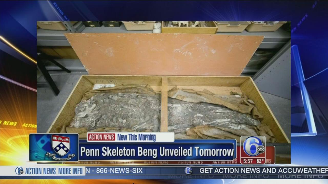 VIDEO: 65-year-old skeleton unveiled at Penn museum