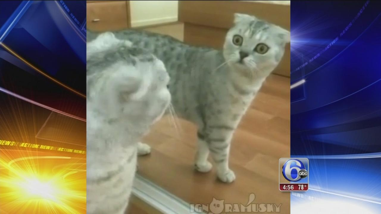 VIDEO: Cat shocked over own reflection