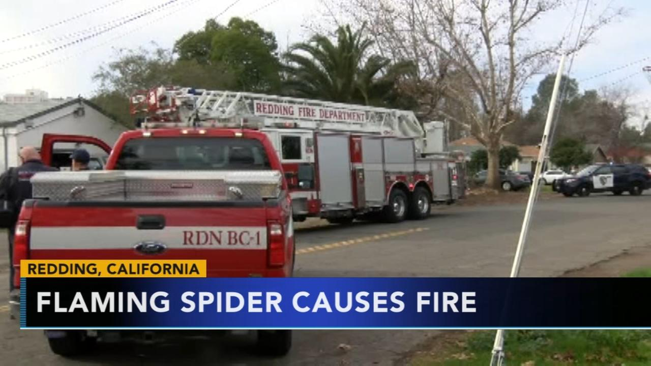 Attempt to kill spider starts fire