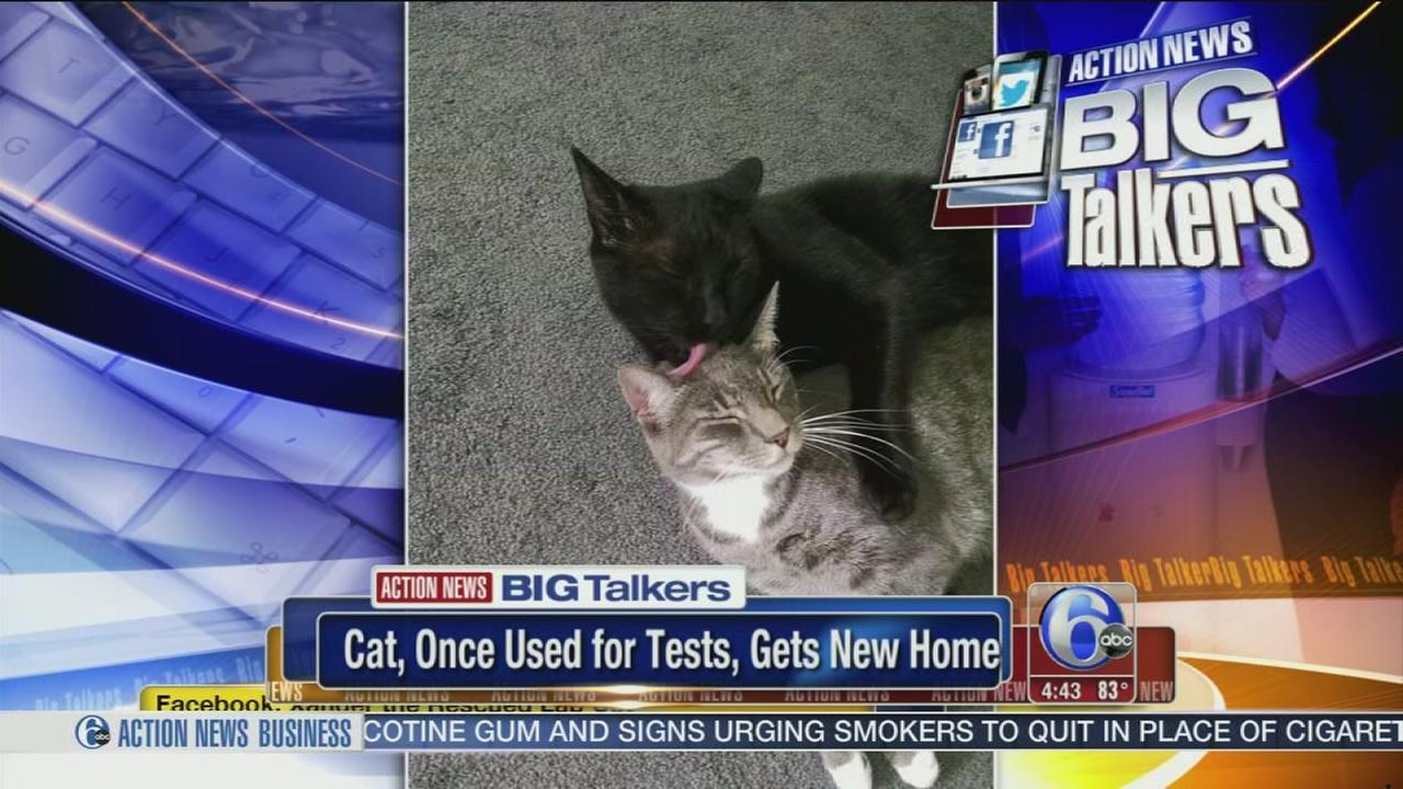 VIDEO: Cat rescued from lab gets taste of freedom