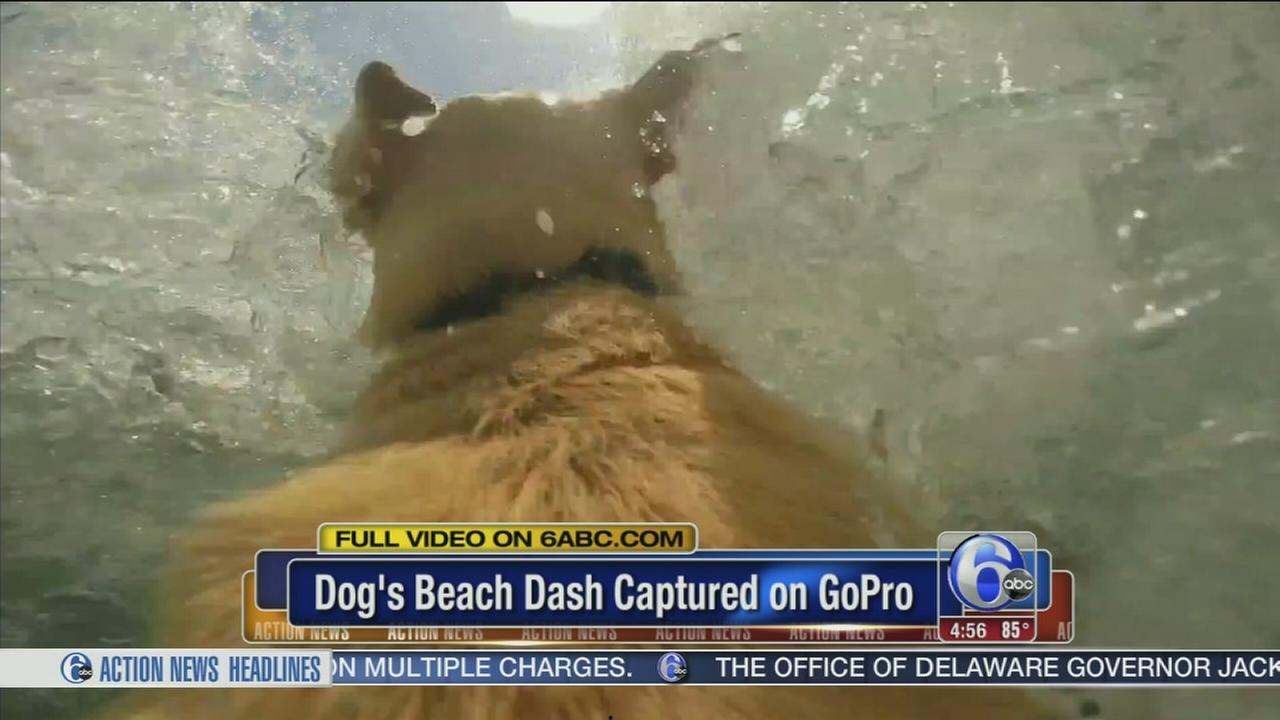 VIDEO: Dogs run to beach filmed by GoPro