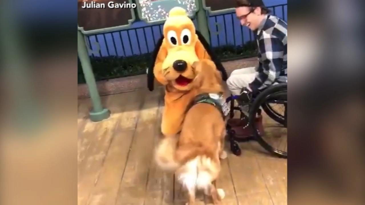 VIDEO: Service dog meets Pluto for the first time