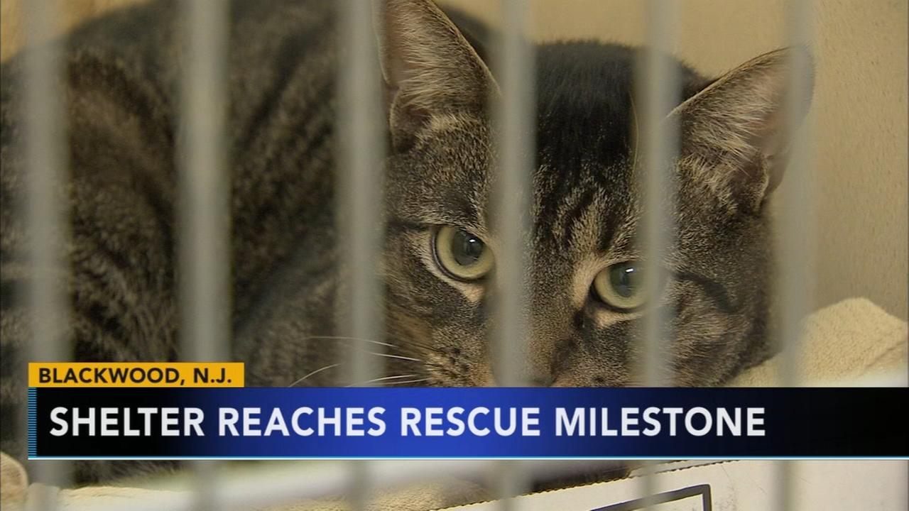 The Camden County animal shelter is celebrating a record setting 2017