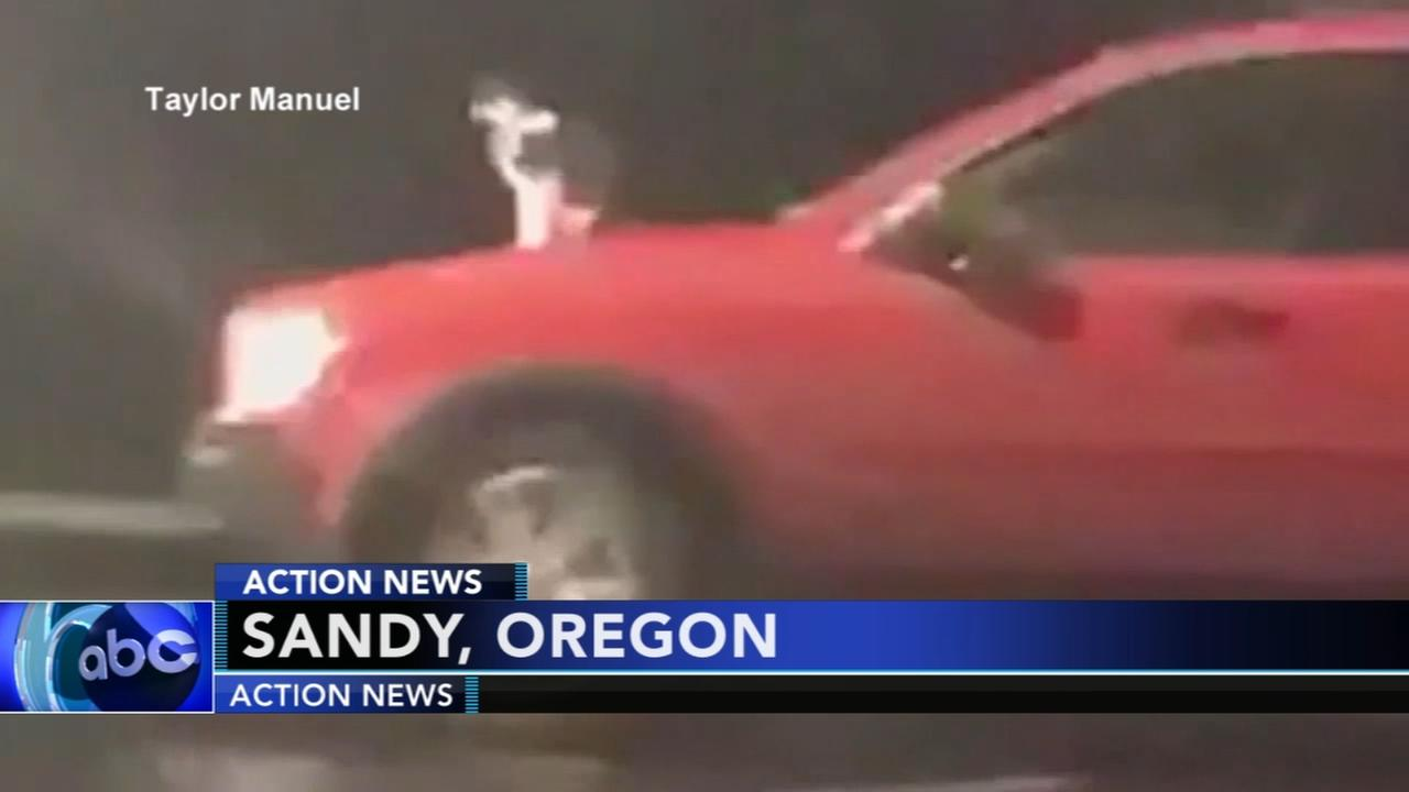 Cat on hood prompts investigation