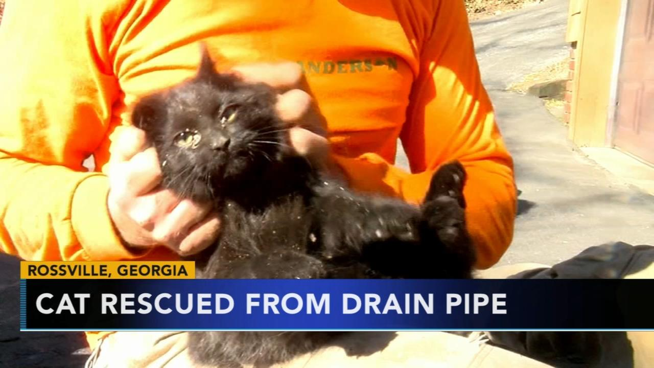 Cat saved after being trapped in pipe for four days