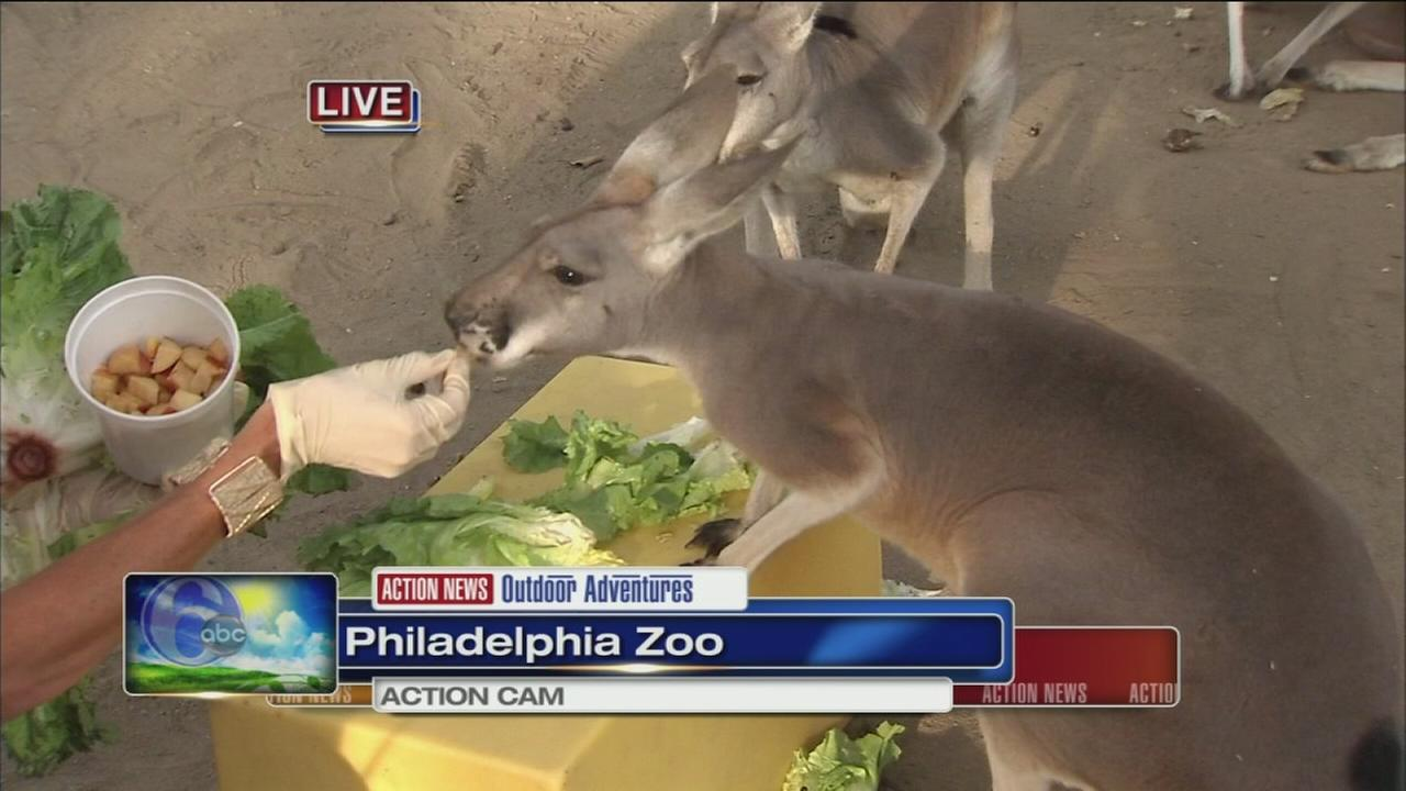 VIDEO: Cecily Tynan at the zoo with kangaroos