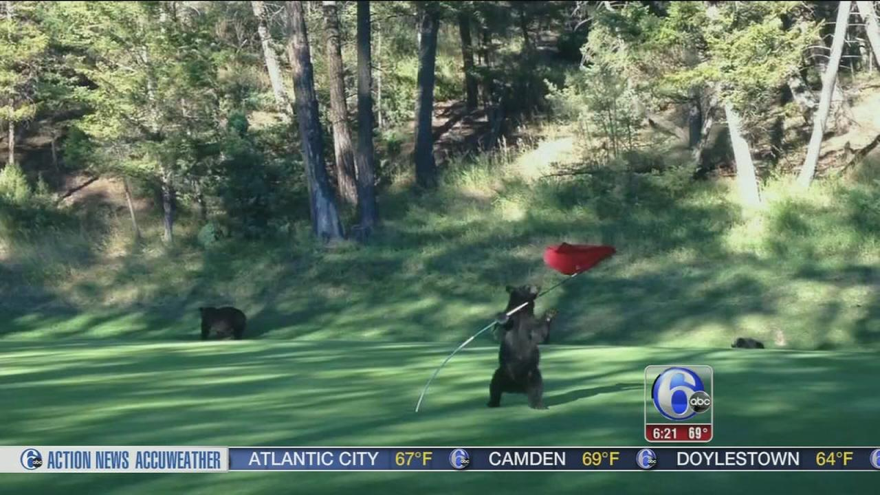 VIDEO: Bear cub disrupts golf game in Vancouver