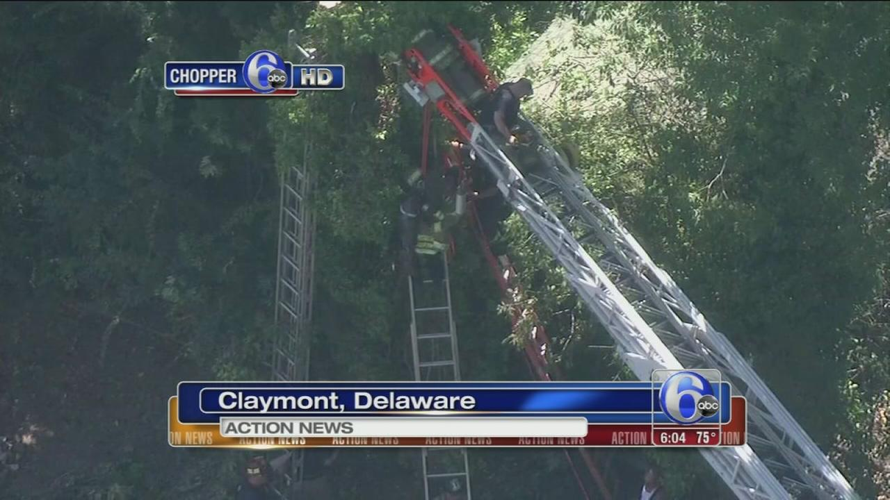 VIDEO: Man seriously hurt by fall in tree, hornet stings