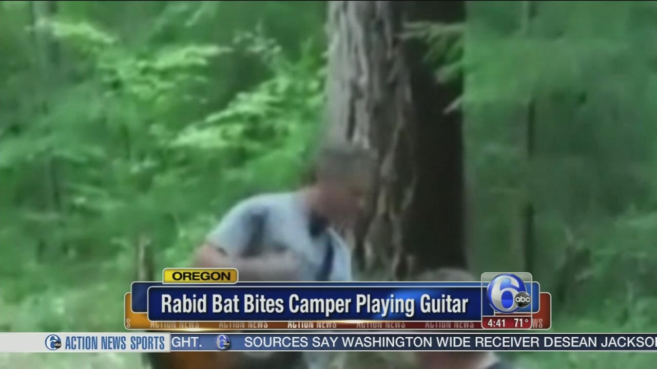 VIDEO: Guitarist dive-bombed, bitten by bat