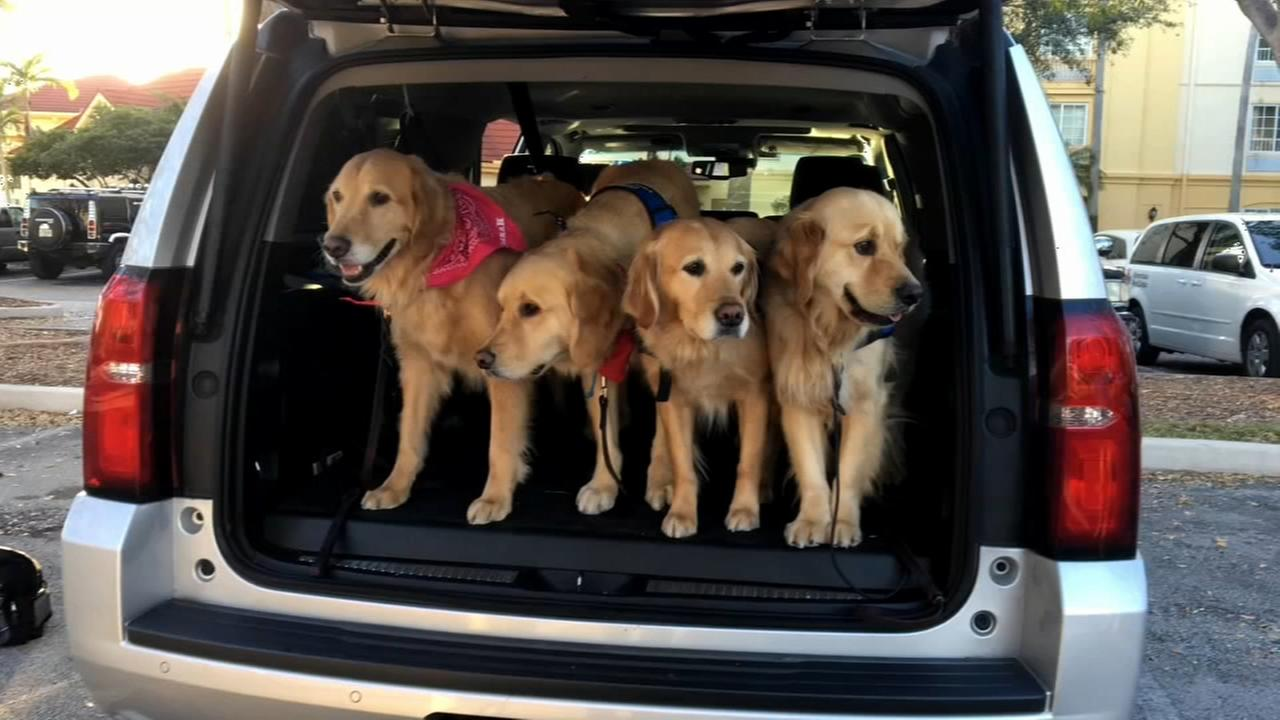 Comfort dogs offer support to community in Parkland, Florida