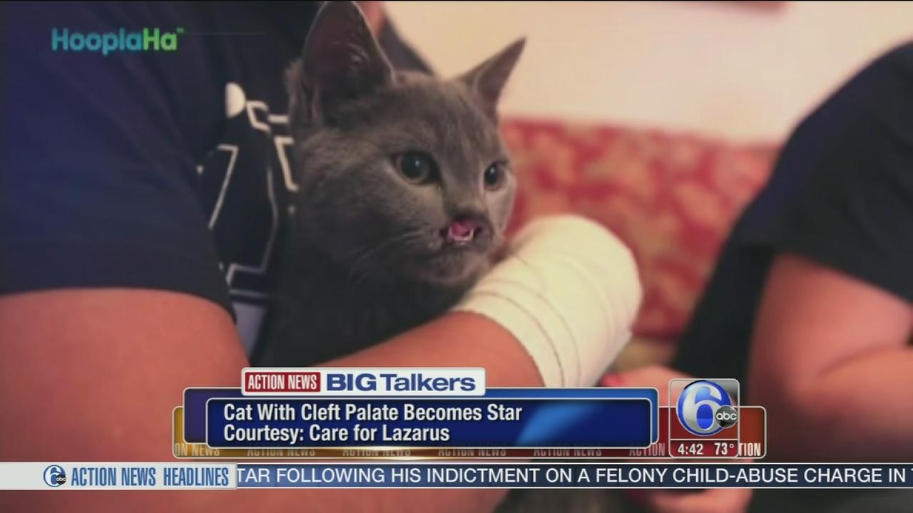 VIDEO: Cat born with cleft palate becomes an internet star