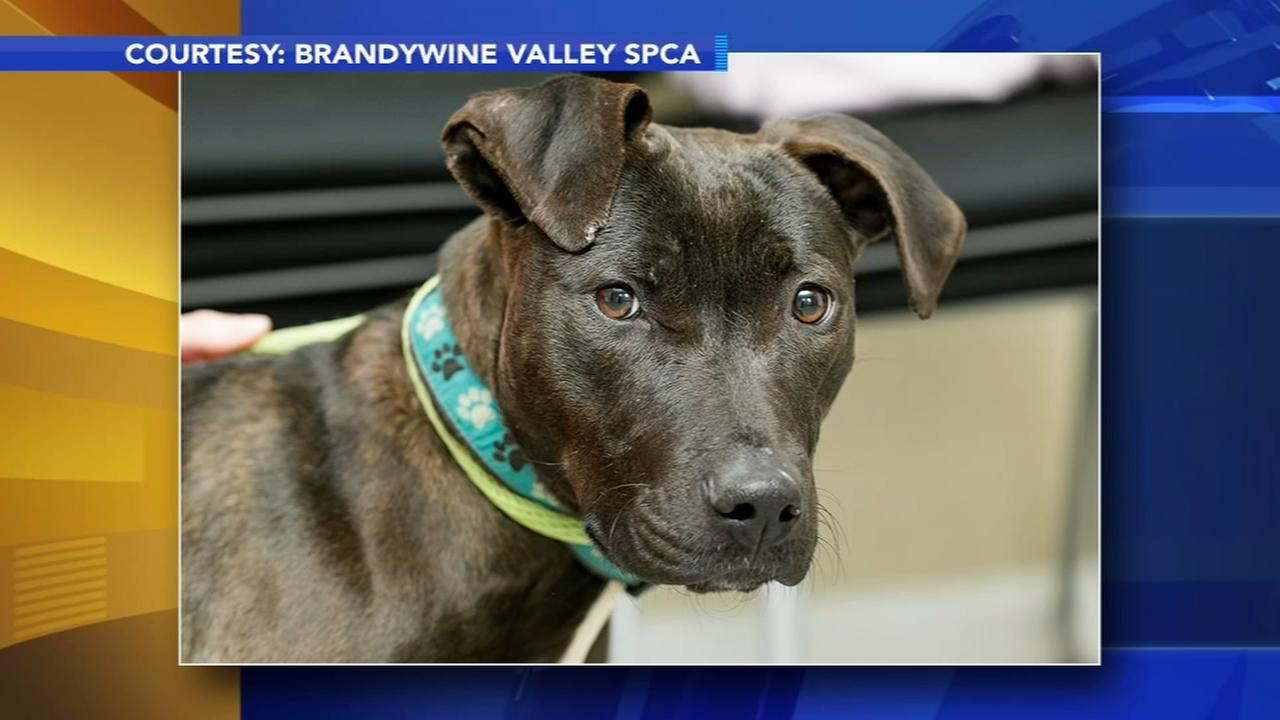 10 animals rescued after dog fighting investigation