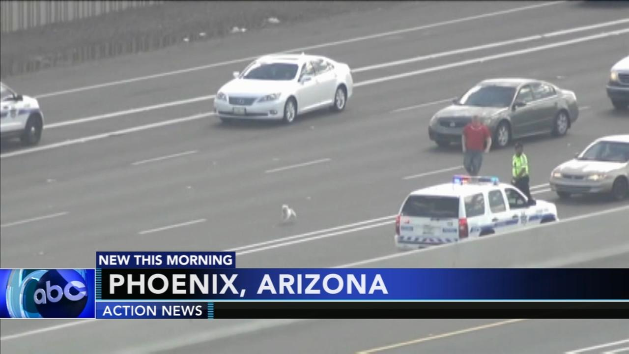 Dog chase brings Phoenix traffic to standstill