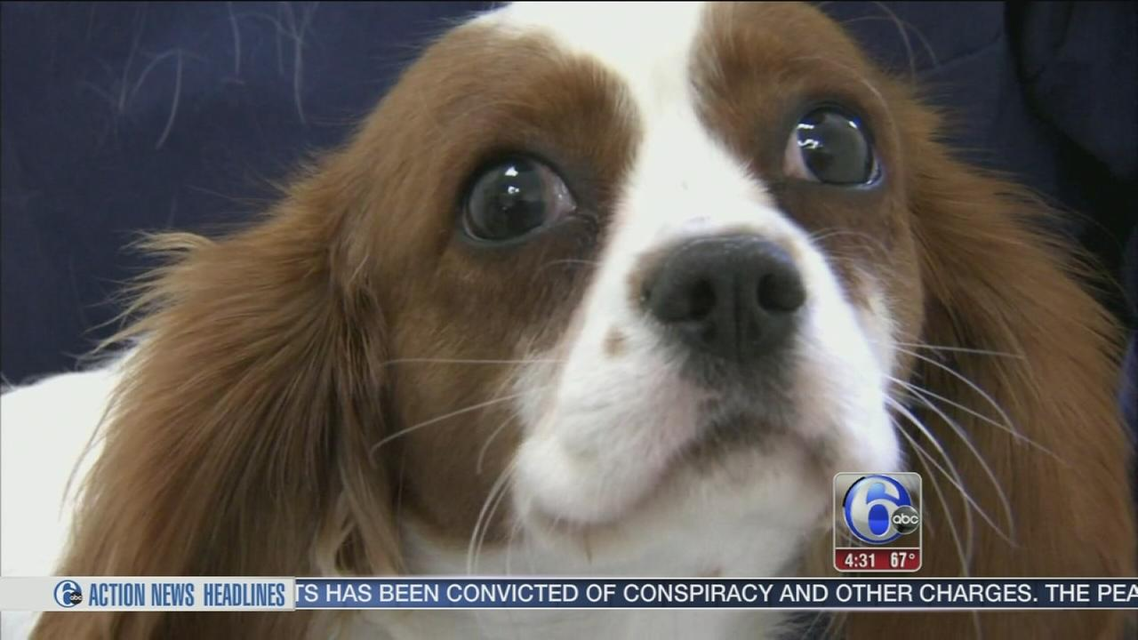VIDEO: Warning about virus thats killing NJ dogs