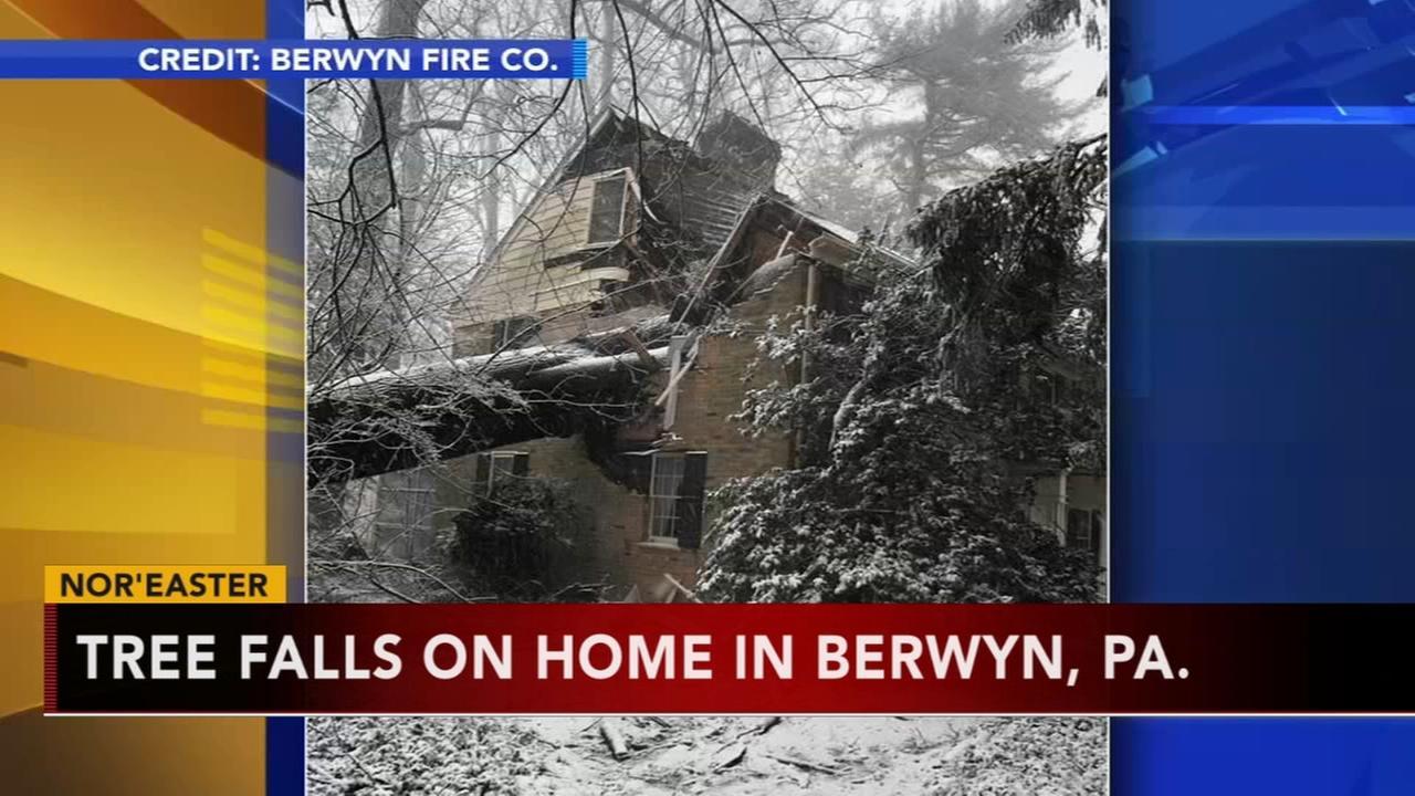 Tree falls through home in Berwyn