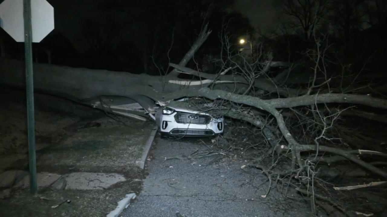 Tree falls on car in Havertown