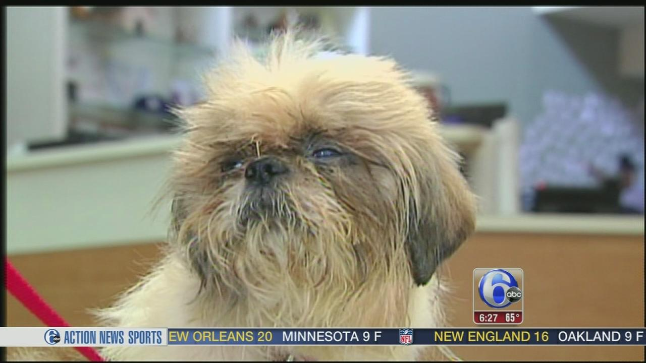 VIDEO: Dog found abandoned in plastic bag