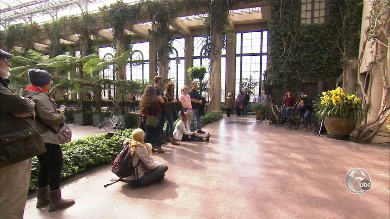 FYI Philly: Orchid Extravaganza