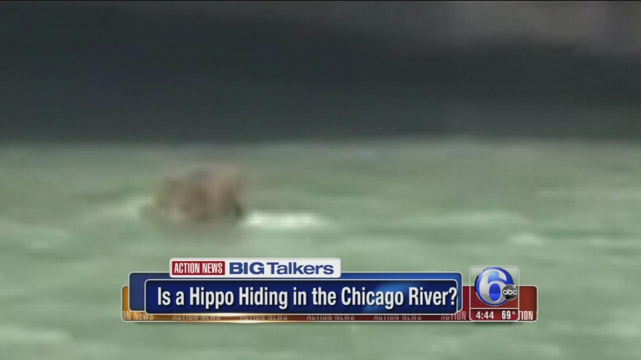 VIDEO: A hippo in the Chicago River?