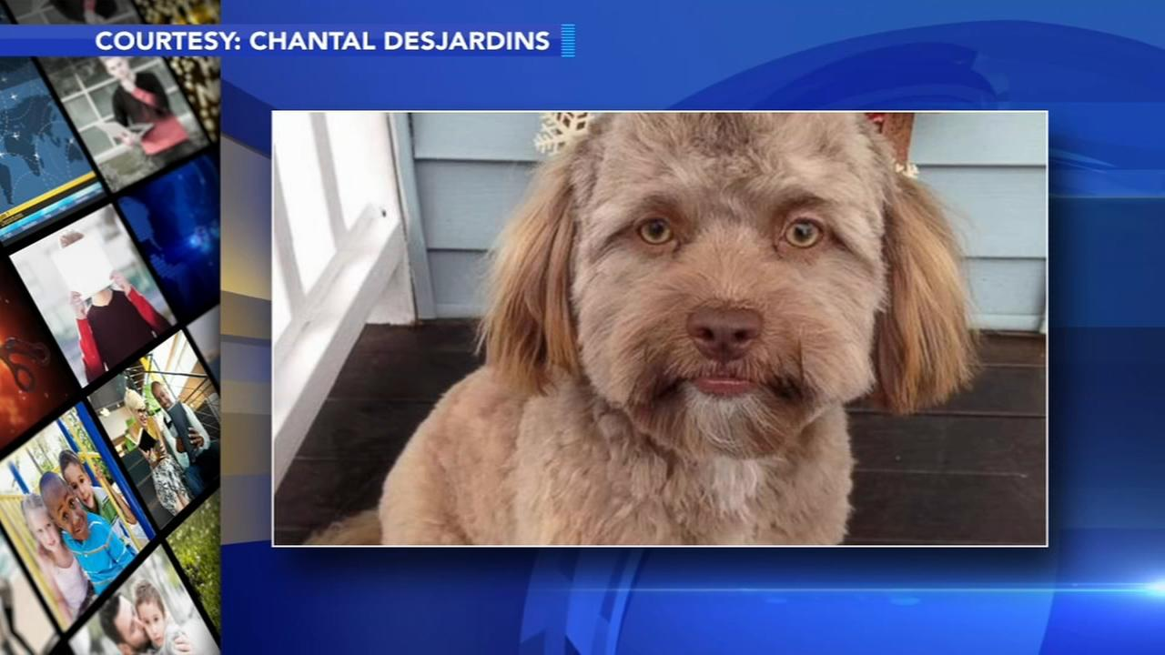 Dog with human-like face becomes latest internet sensation