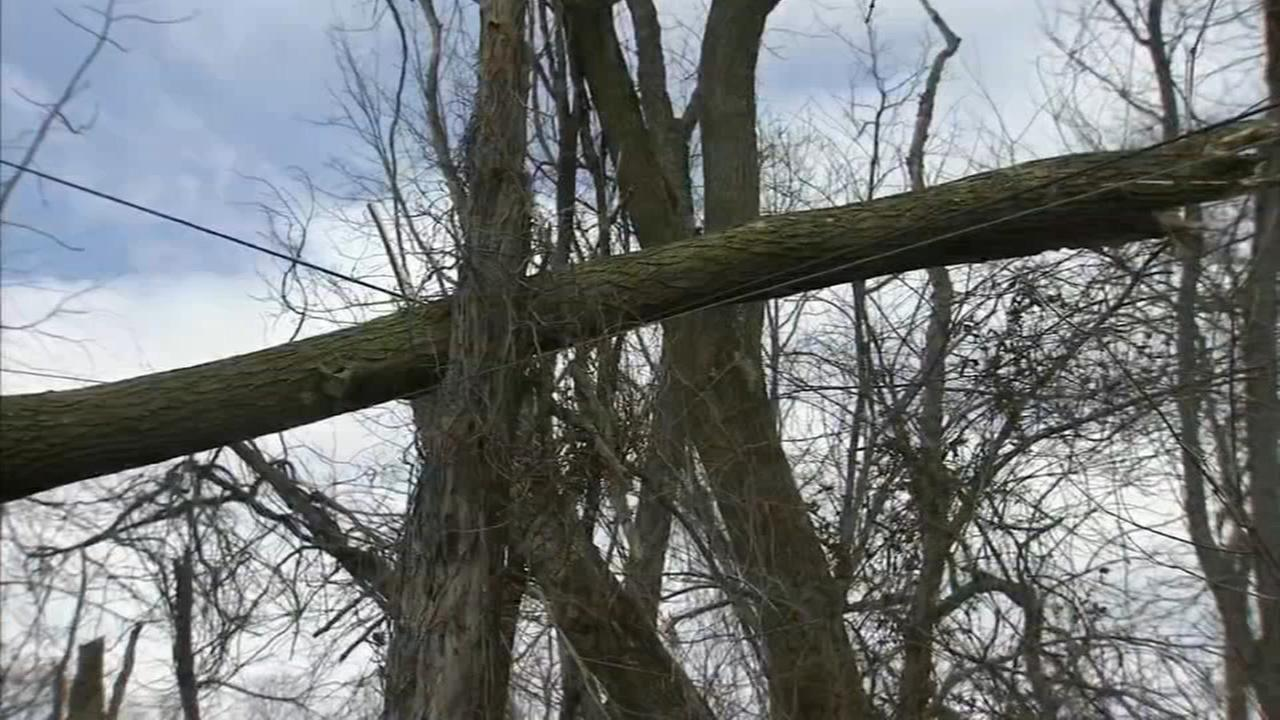 Family begs for help over tree resting on power lines