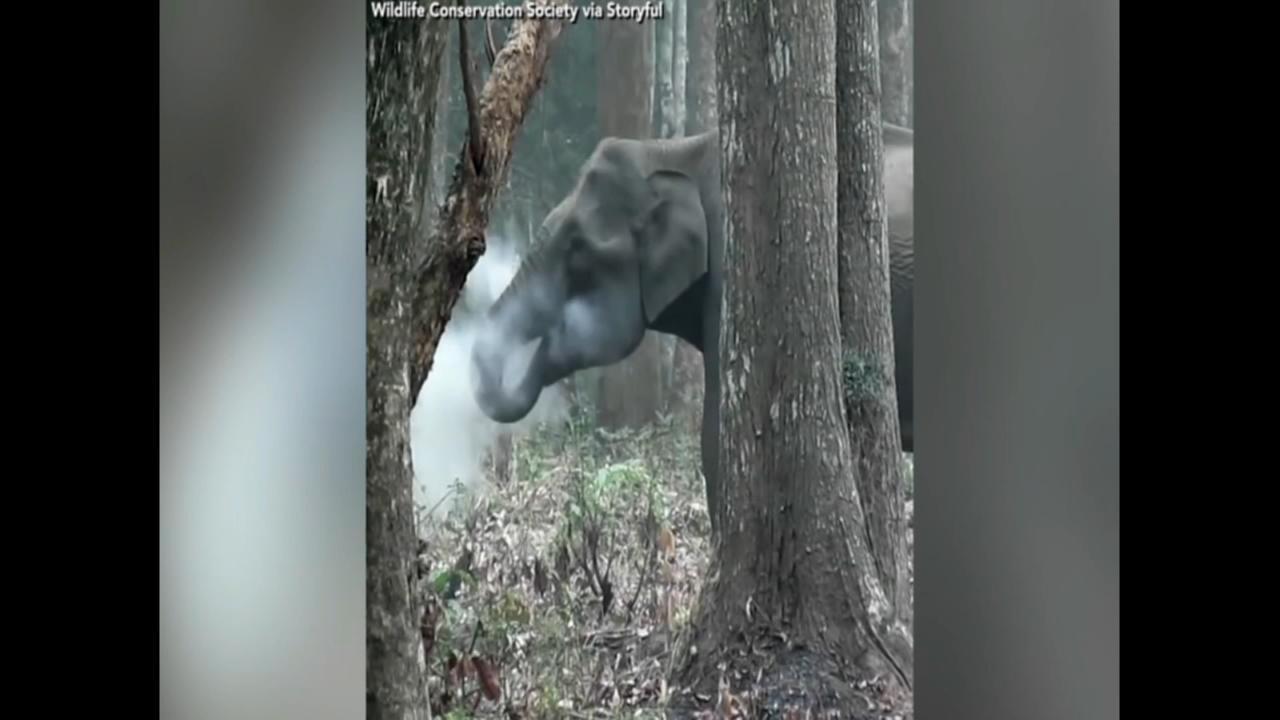 Smoke breathing elephant leaves scientists confused