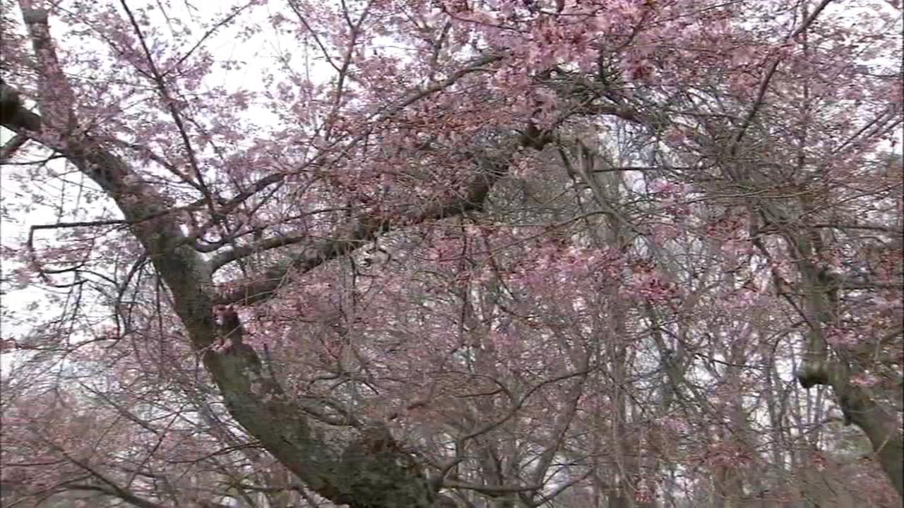 The seach for spring in the Delaware Valley