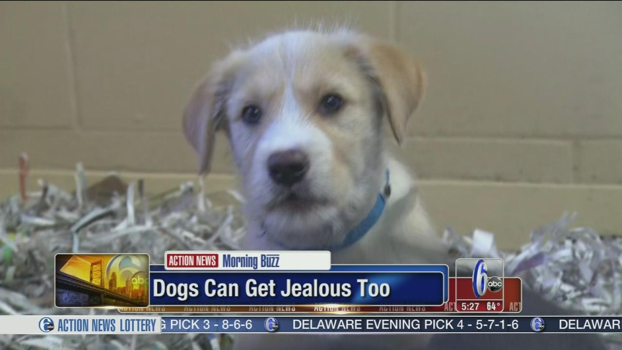 VIDEO: Study shows dogs get jealous too