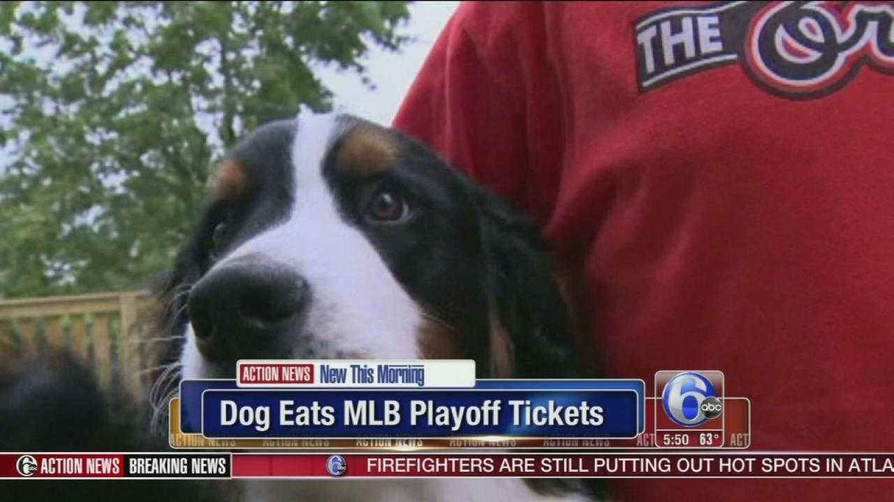 VIDEO: Dog eats MLB playoff tickets