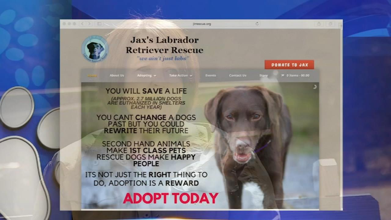 Shelter Me - Jaxs Labrador Retriever Rescue