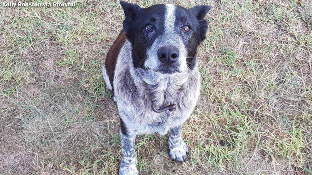 Deaf, partially blind dog helps rescue girl lost in the woods