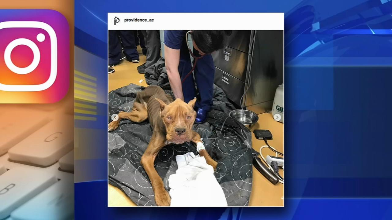 Emaciated dog found in Chester County