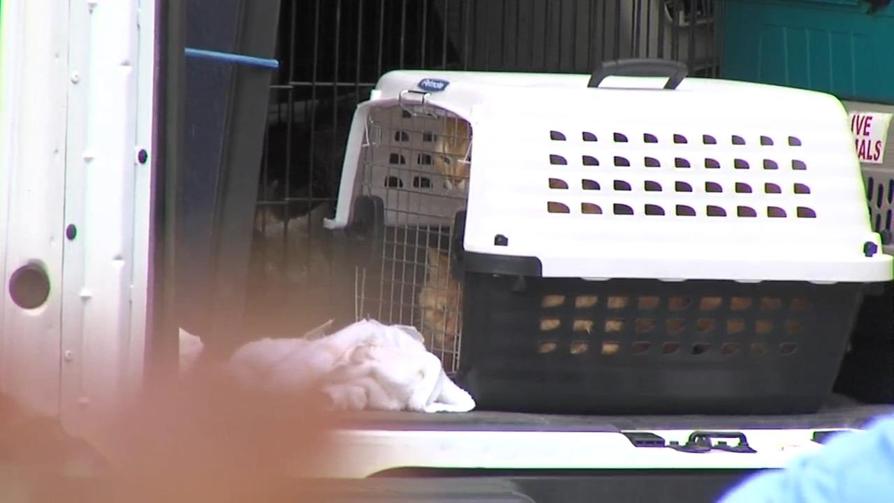 More than 100 cats removed from Hatboro home