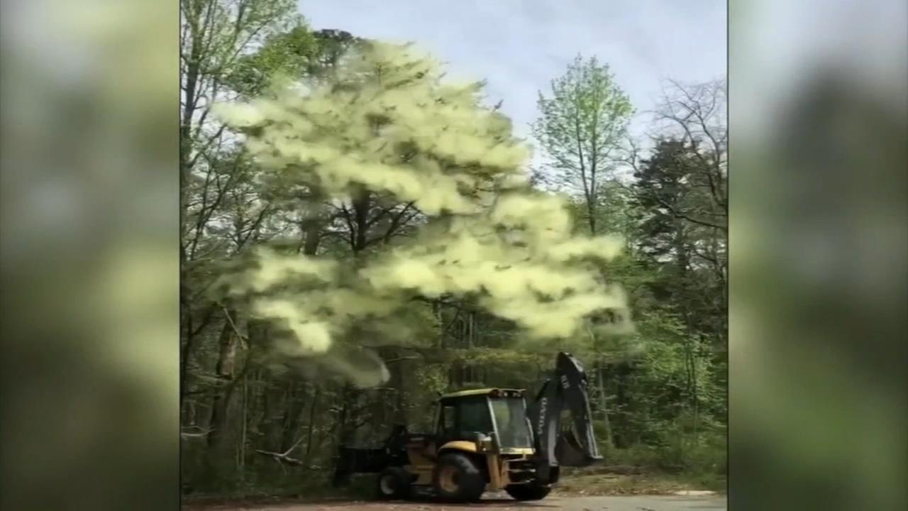 Extreme pollen sending allergy sufferers into misery