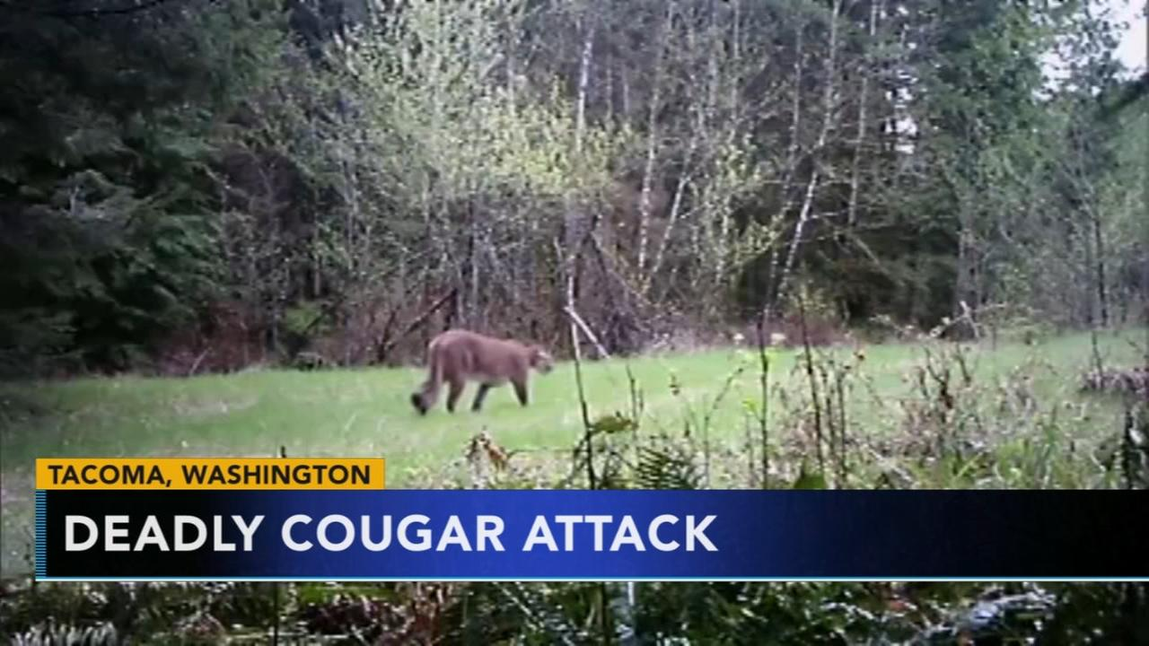 Cougar kills 1 mountain biker, injures 2nd near Seattle