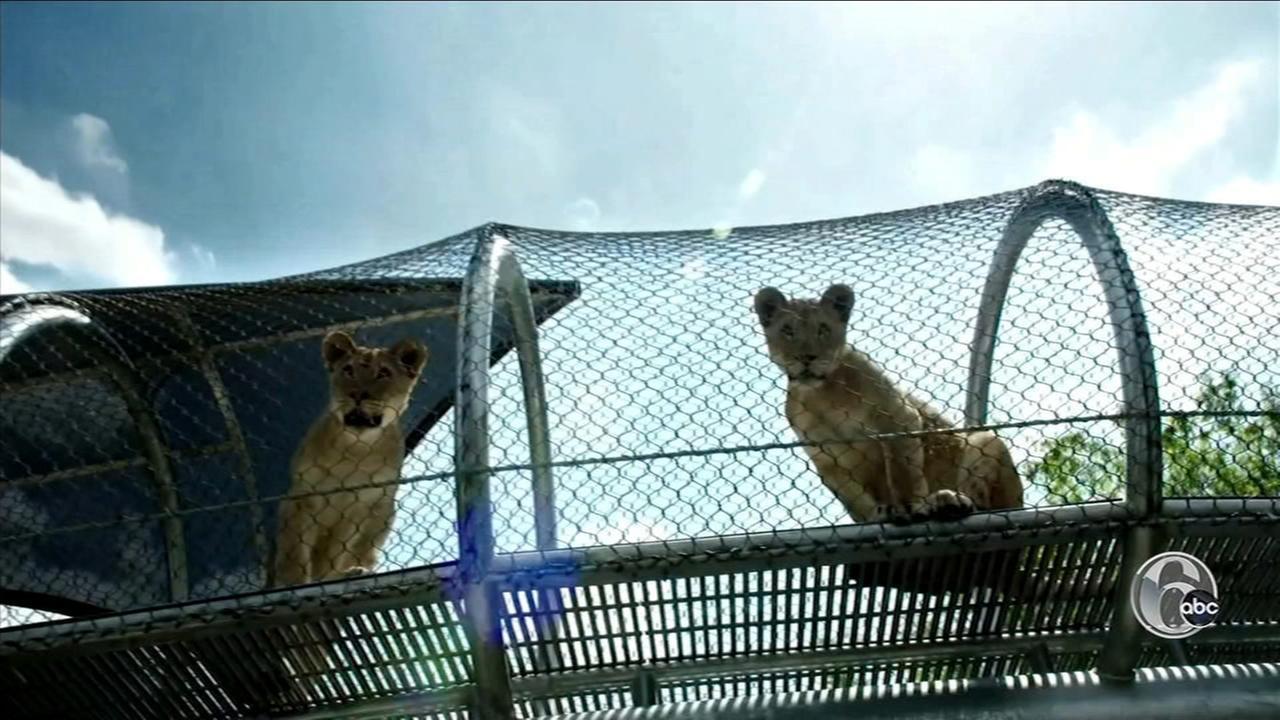 Zoo: Zoo 360