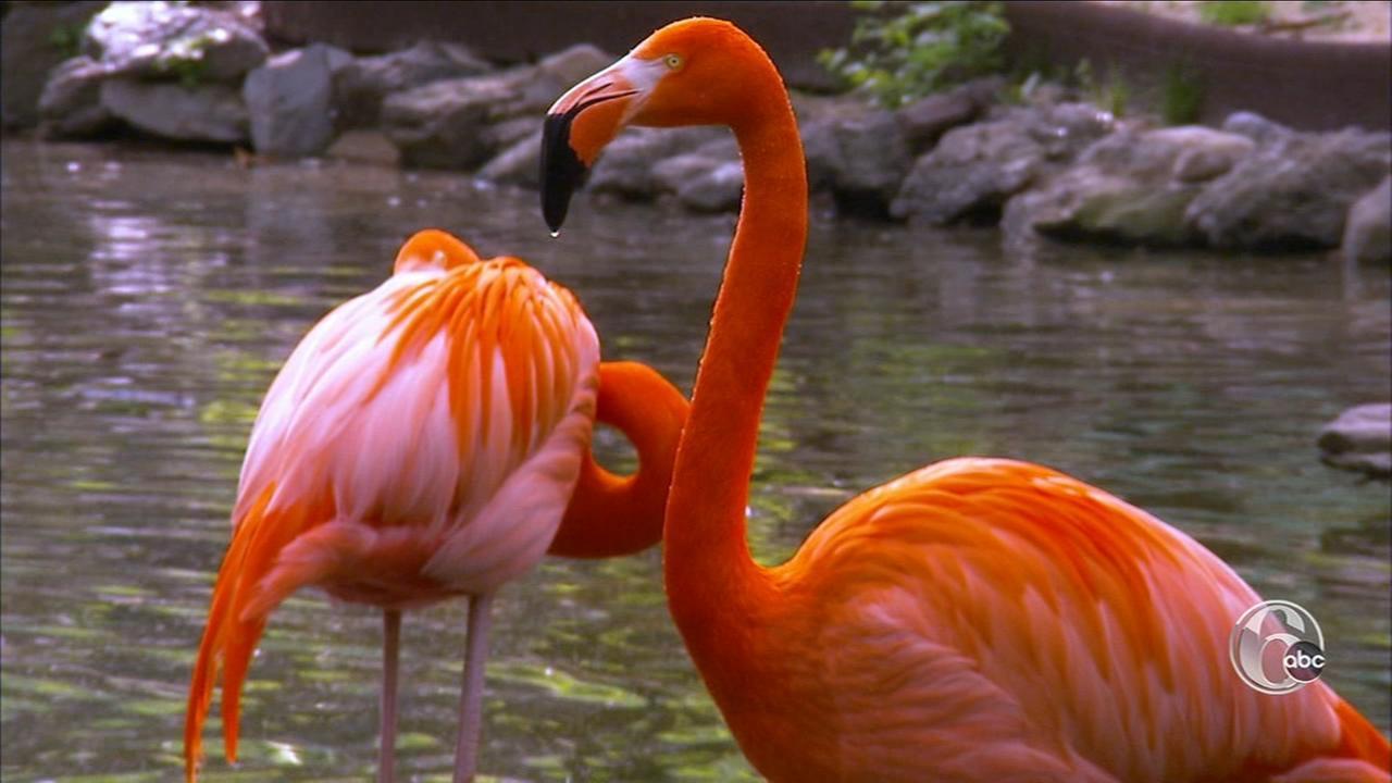 Zoo: New Animals