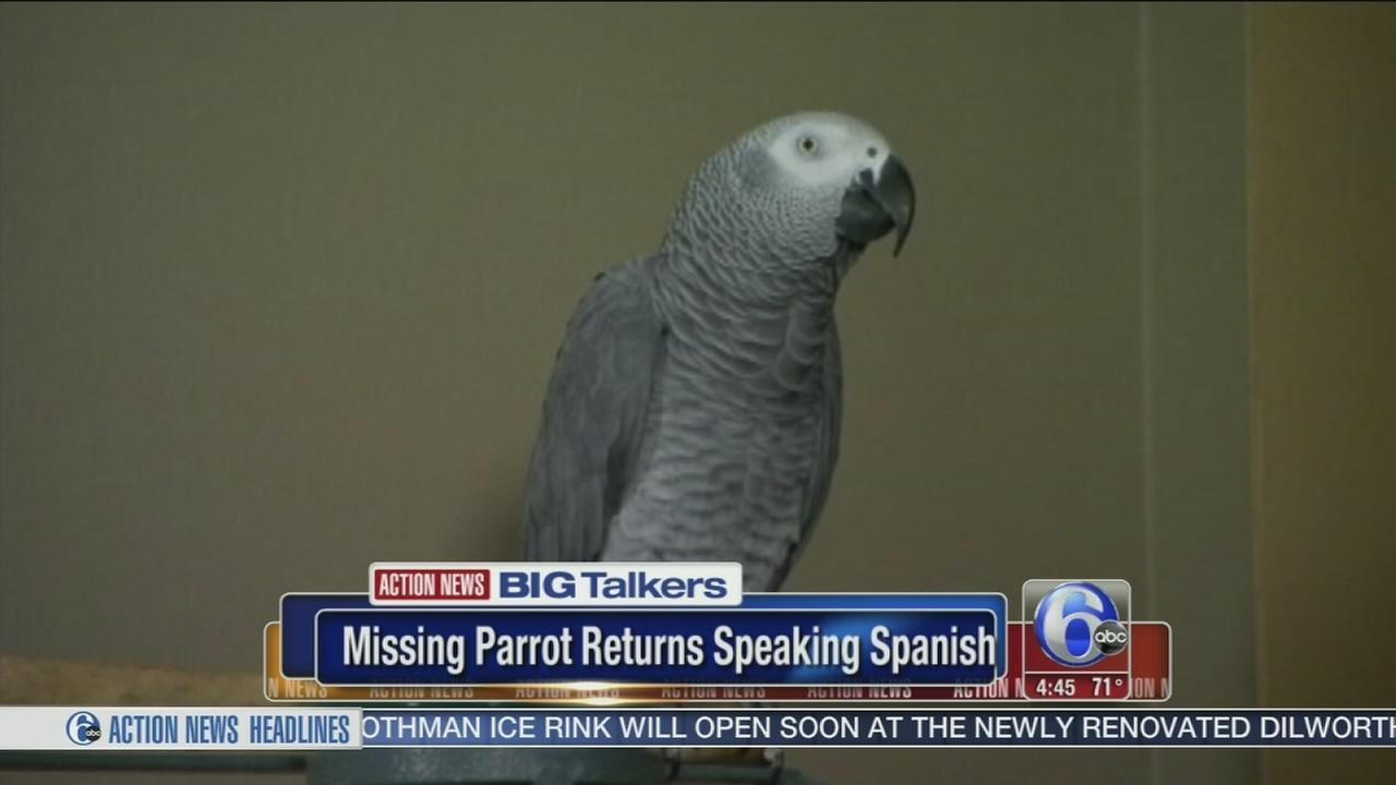 VIDEO: Parrot missing for years returns speaking Spanish