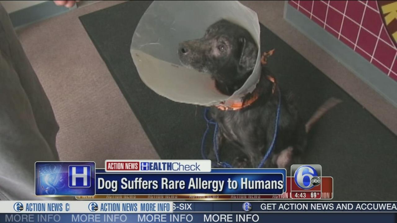 VIDEO: Dog suffers rare allergy to humans