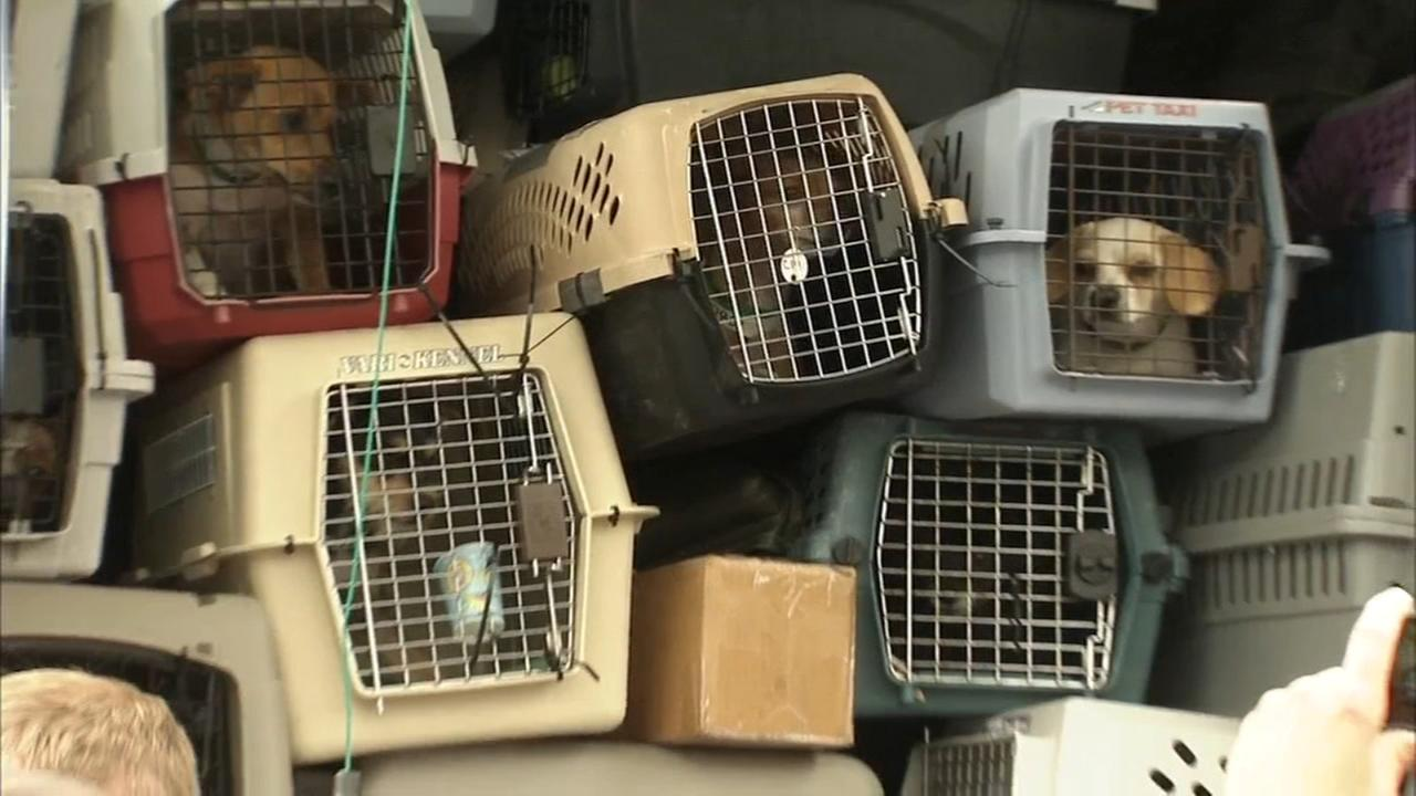 Rescue dogs from at-risk shelters arrive at Brandywine Valley SPCA