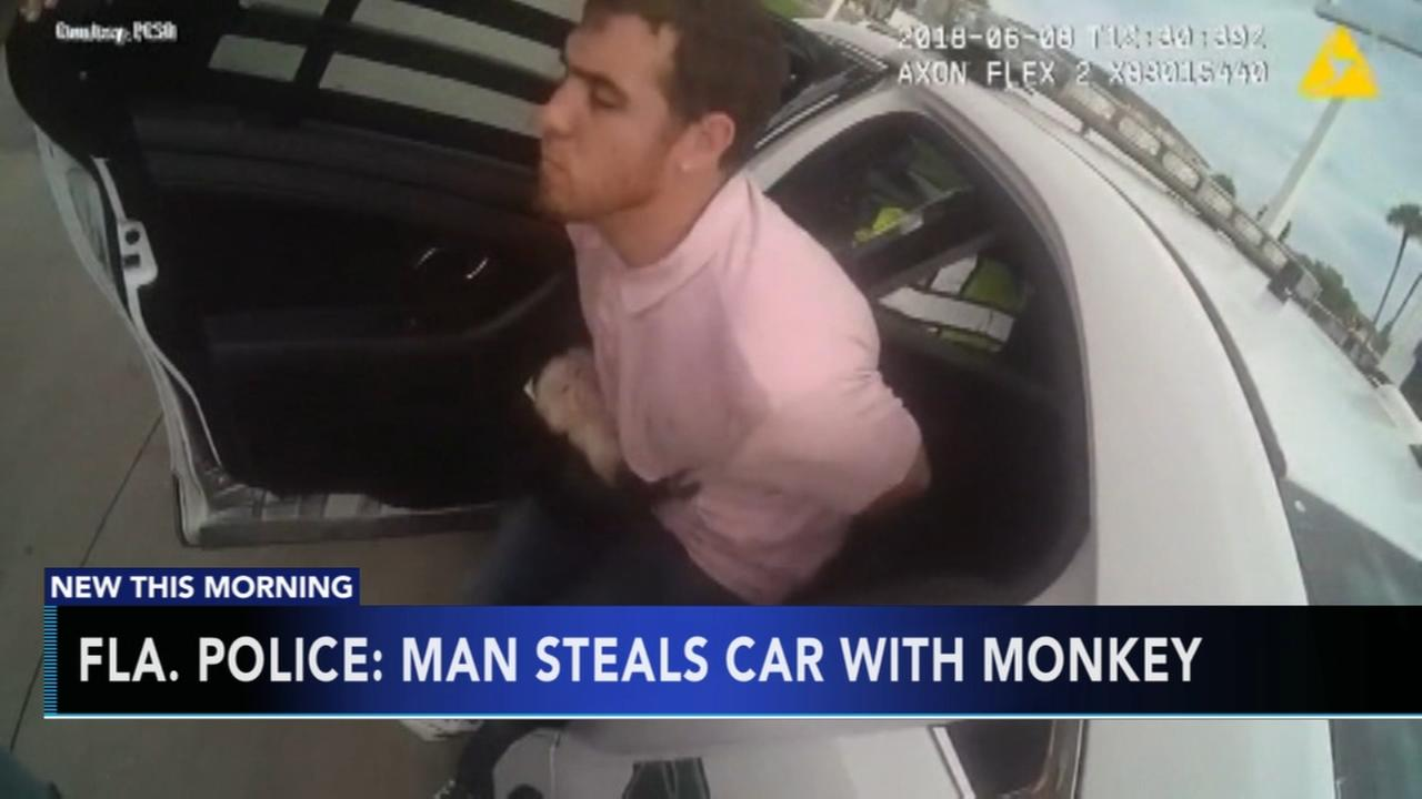 Police: Man steals car with monkey in Florida