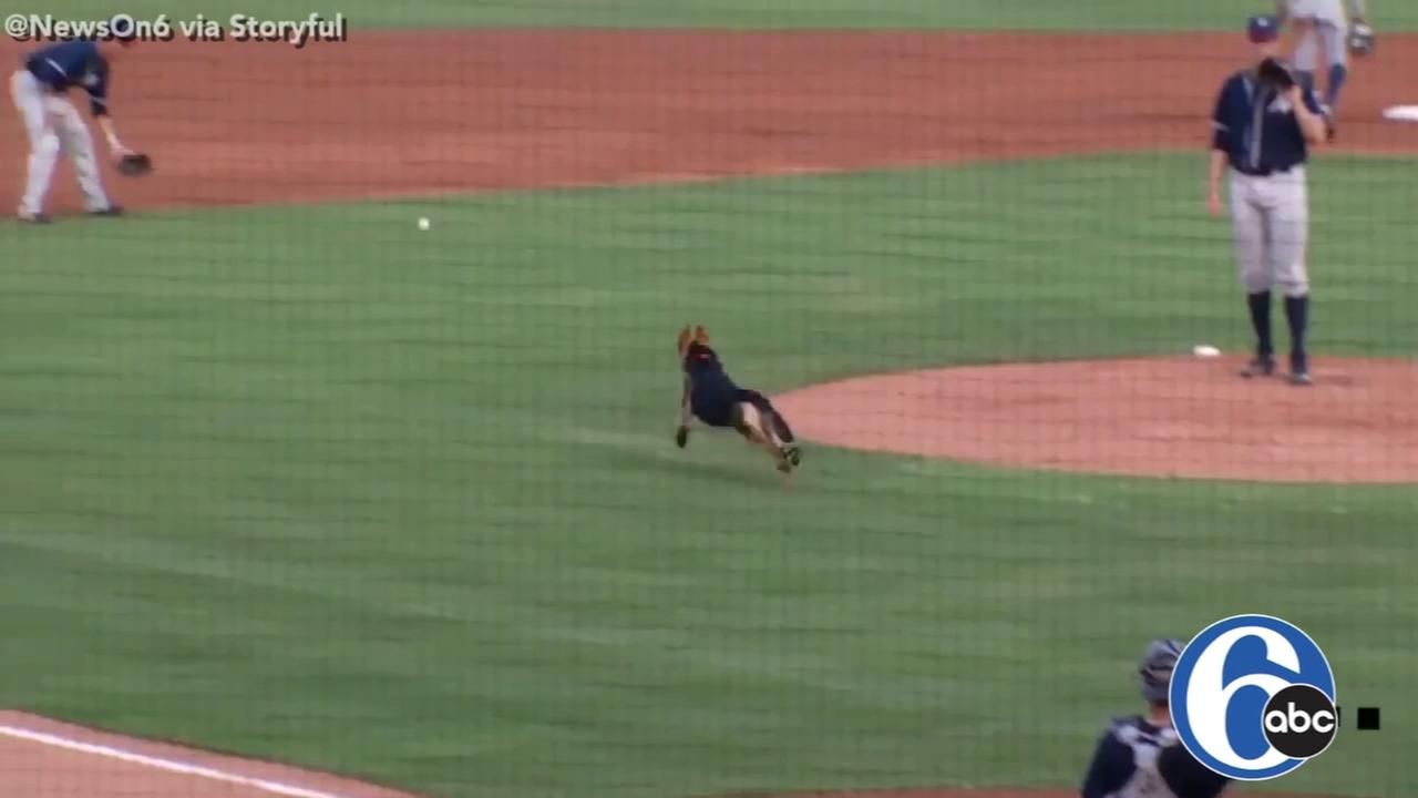 Pup has a ball during dog day at Tulsa baseball game
