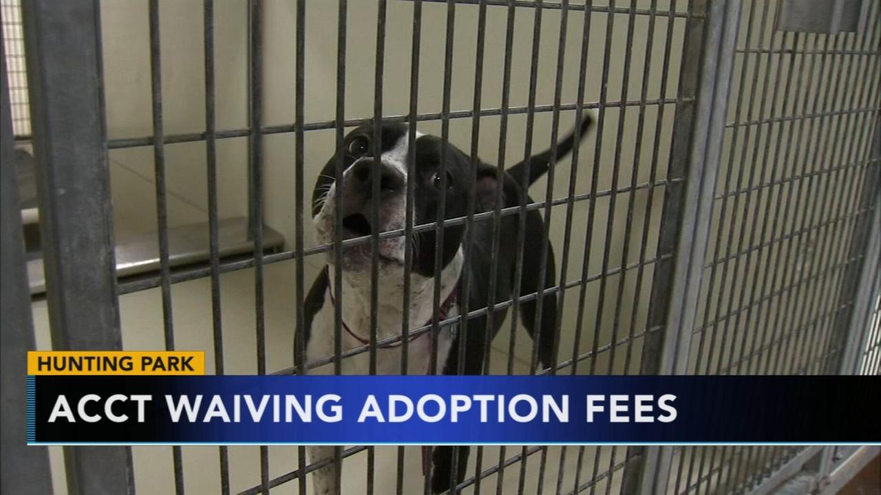 ACCT in Hunting Park waives adoption fees until Sunday