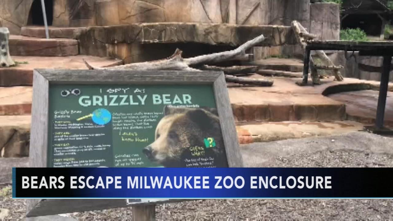 Zoo visitors moved to secure areas after grizzly bears escape enclosure